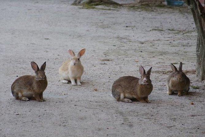 Fee Rabbit