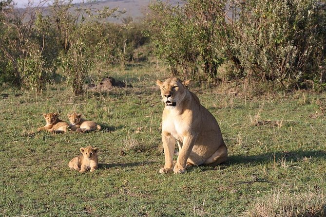 3-Day Maasi Mara Tented Safari from Nairobi