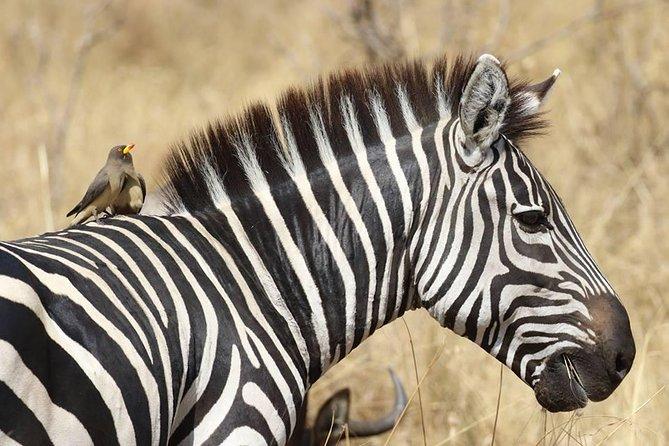 6 Days Samburu National Park,lake Nakuru And Masai Mara National Park
