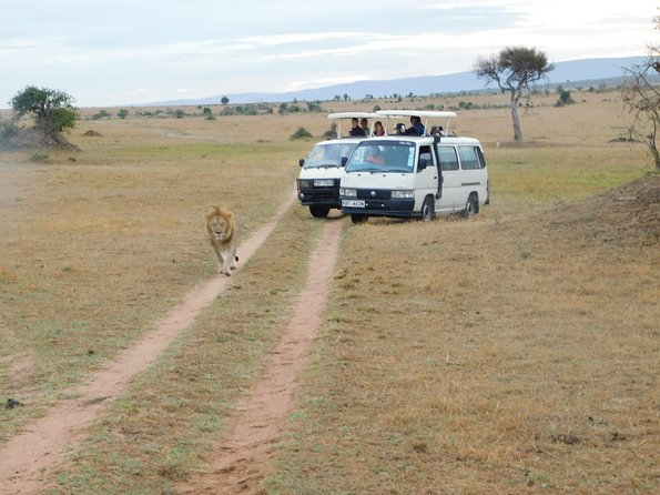 4 Day Private Masai Mara National Reserve & Lake Nakuru National Park Safari