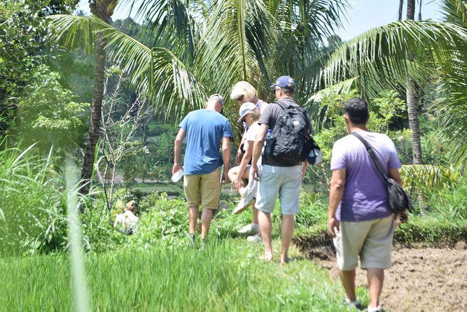 Tetebatu Walking Tour - Rice Terraces, Waterfall & Monkey Forest