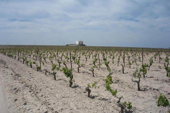 Private Jerez Winery and Jerez Brandy Experience from Seville Hotel pick up