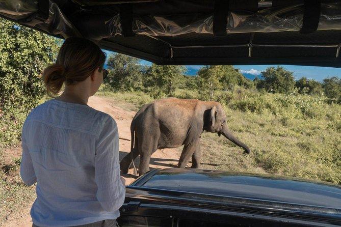 All inclusive - Udawalawe Safari & Elephant Transit Home Visit
