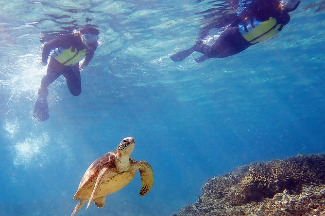 Sea Turtle Snorkeling