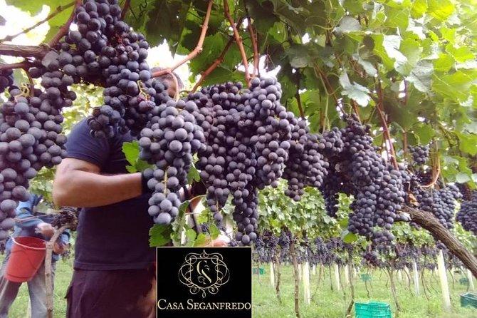 Tour Guiado com Degustação de Vinhos na Casa Seganfredo - Gramado