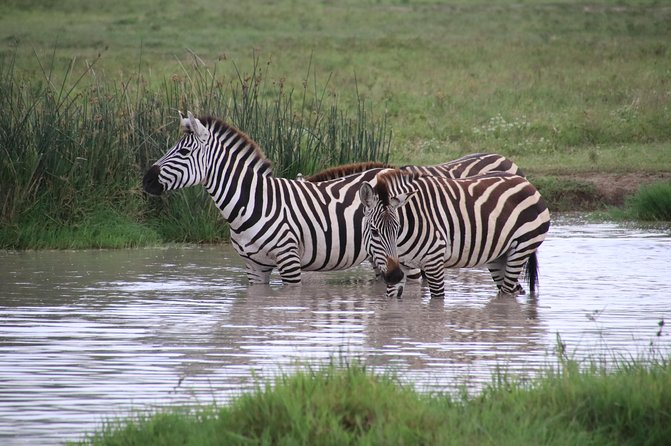 4 Day Wildlife Safari