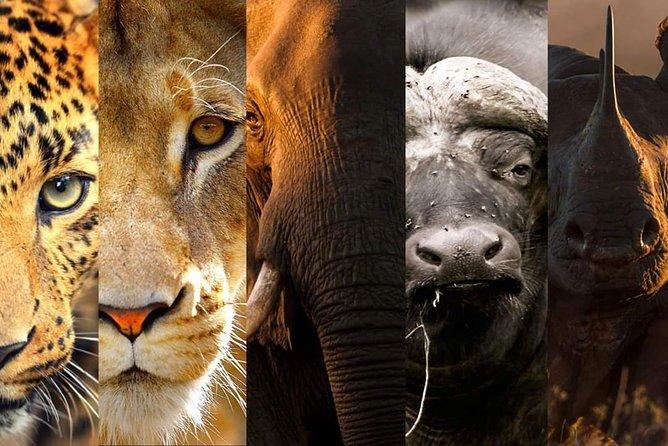 4-Day Serengeti, Ngorongoro,Tarangire safari