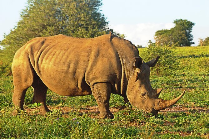 4 Day Safari to the Kruger National Park, Sudwala Caves and Blyde River Canyon