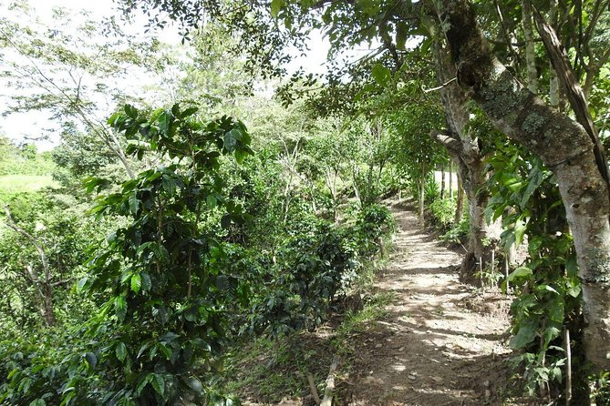 Walking trail in Finca La Cueva near Marcala, Honduras