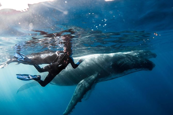 Ocean Wildlife Expedition; Swim With Whales, Sharks, & Rays Half-Day Boat Tour