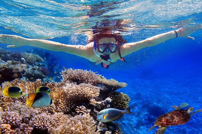 Snorkeling, Flying Fish & Donut Boat Experience In Tanjung Benoa