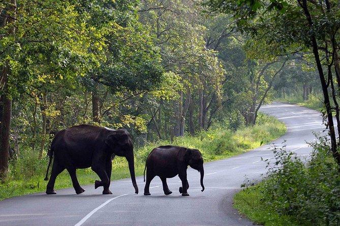 10Night - Kerala & Karnataka Tour - Luxury Honeymoon