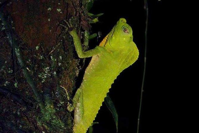 Night Walk - Makandawa Rain Forest