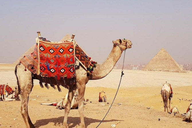Guided Half-Day Trip to Giza Pyramids with Camel-Riding