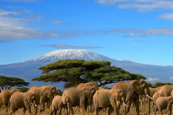 7 days 6 nights Amboseli,Aberdares,Nakuru,Masai Mara Safari