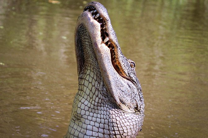 4-Hour Private Airboat Ride with Tranportation from New Orleans