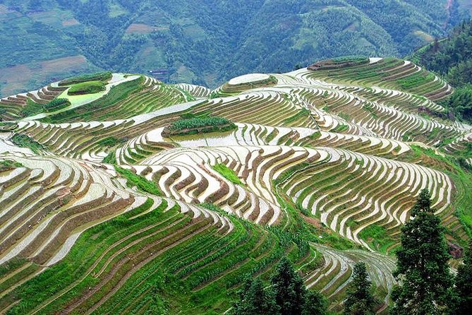 Longji Rice Terrace and Minority Private Day Tour photo 1