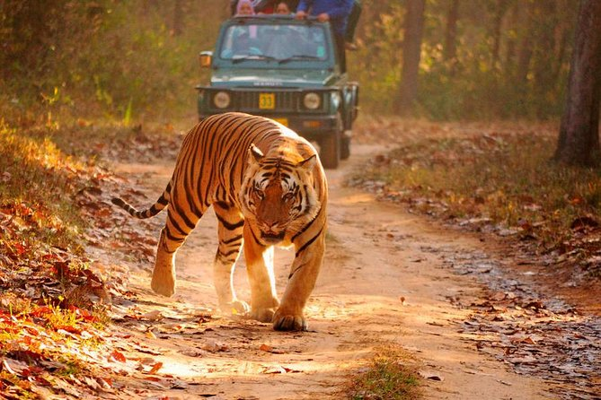 Explore Beauty of Jaipur and Ranthambore - Multi Day Tour
