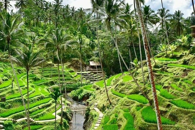 Wonderful of Ubud & Jungle Swing Private Guided Tour - Free WiFi