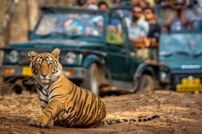 Ranthambore Day Trip From Jaipur - A Guided Private Car Tour