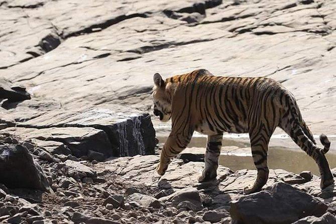 Ranthambore Tiger Safari with Taj Mahal & Pink City