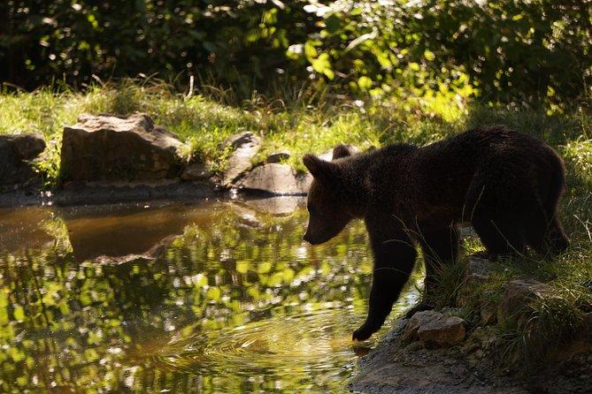 Bears Sanctuary & Dracula Castle Day Tour from Bucharest