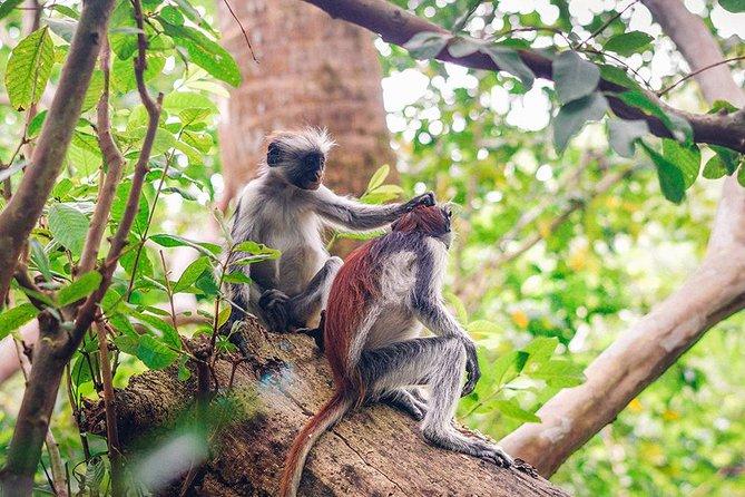 Zanzibar Jozani National Park