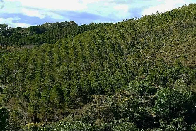 Coffee plantation full-day tour from Medellin private photo 15