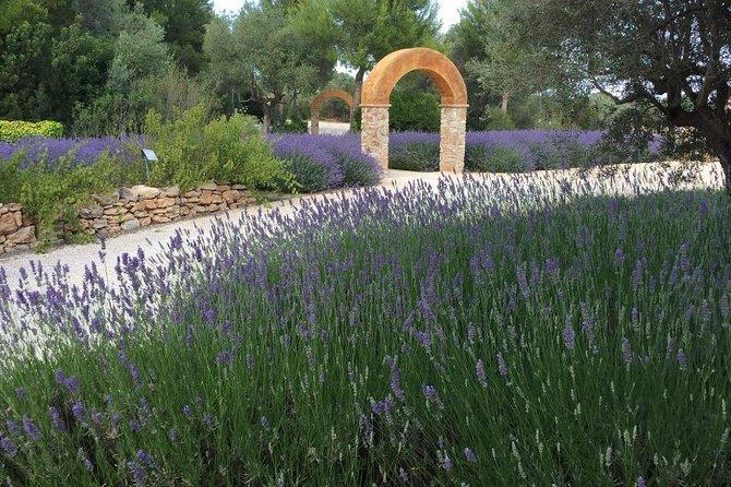 Visit to the Botanical Garden of Medicinal Plants