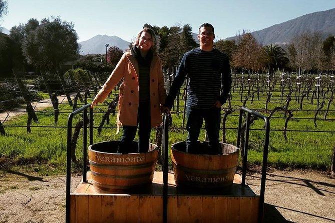 4 vineyards + sommelier guide + 8 wine tastings + empanada + cheese board
