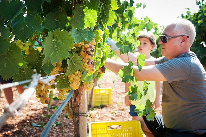 Grape harvest festival, food and wine in the trulli