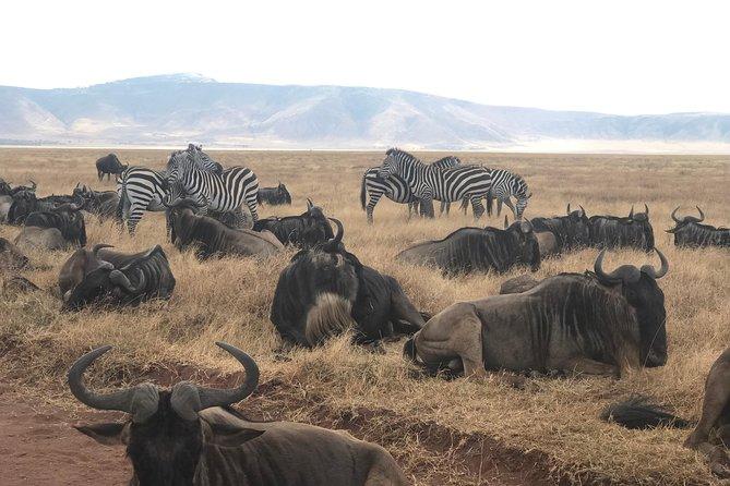 5 DAYS DISCOVER TANZANIA (Lake Manyara NP,Ngorongoro & Serengeti NP )