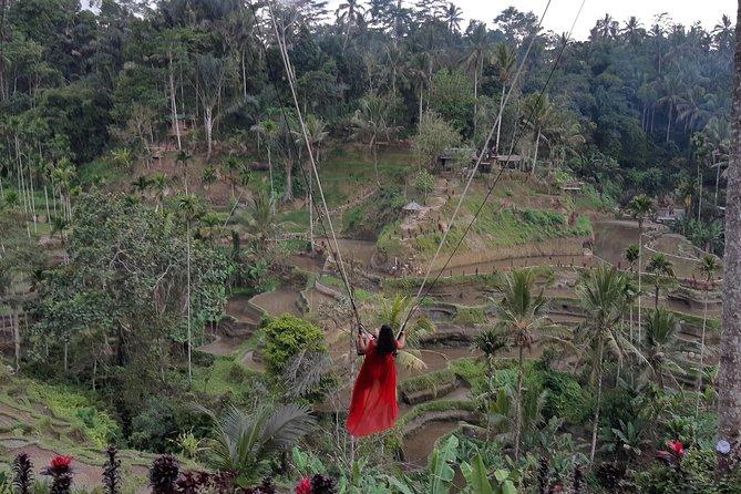 Rice Terraces Swing and Ubud Tour