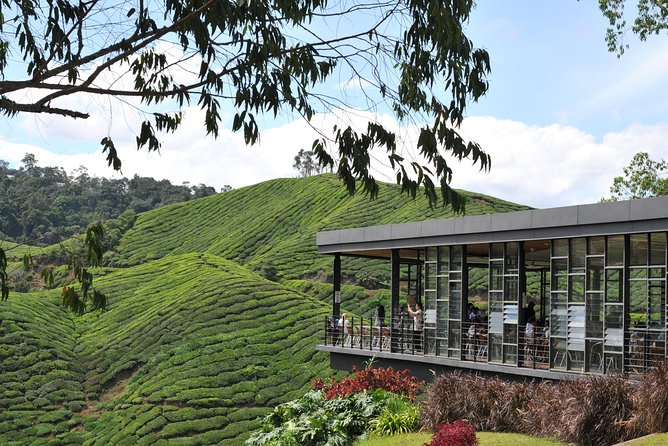 Cameron Highlands Tour From Kuala Lumpur (Private Tour)