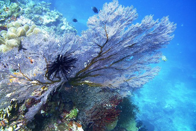 Try Scuba Diving with BALI DIVING at TULAMBEN