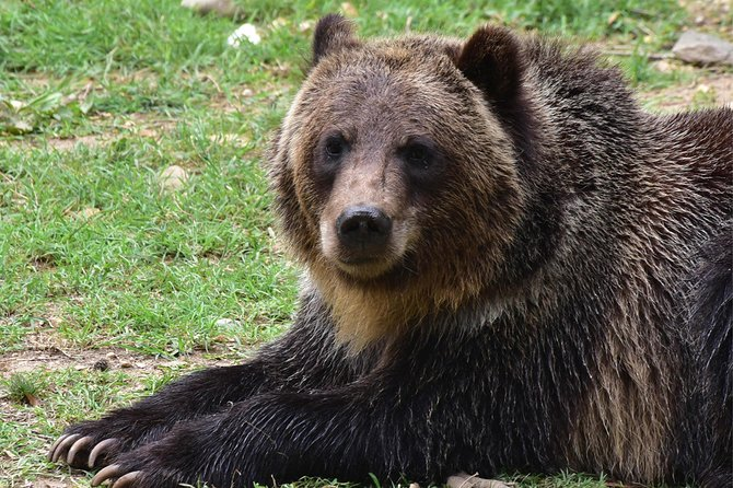 Bear Sanctuary, Dracula's Castle and Brasov, 1-Day Private Tour, from Bucharest