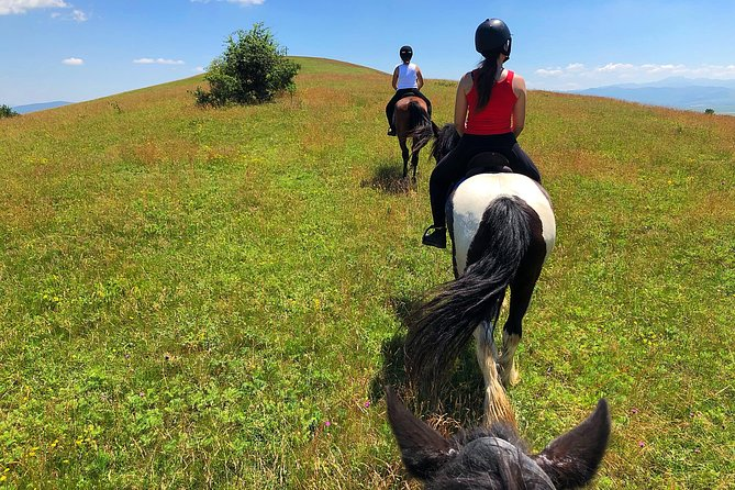 Horseback Riding Tour In Brasov - Ride Horses Through Fields, Forests And Hills