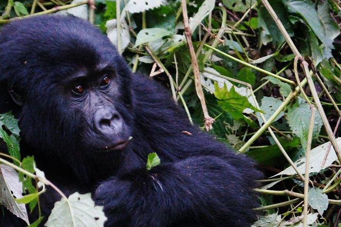 9 Day Gorilla Trek Uganda & Wildlife Safari