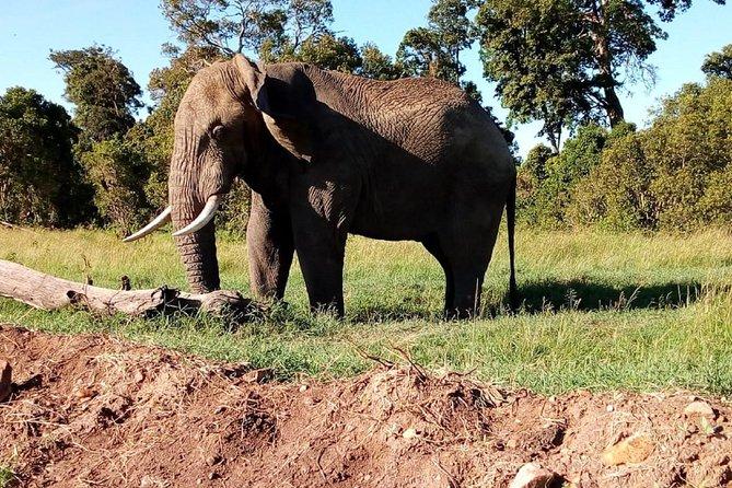 4-days safari: Tsavo east, west and Amboseli national parks