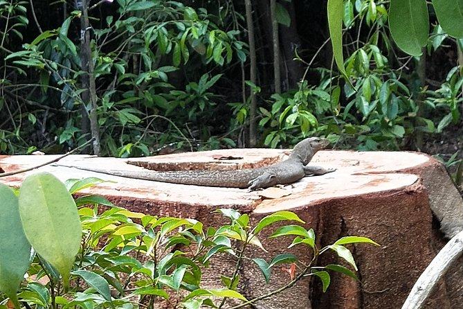 Tropical RainForest and Orchid Garden Walk (UNESCO)