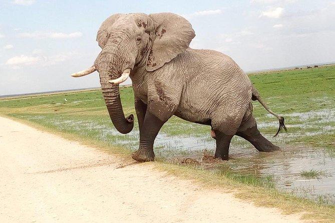 Tsavo East & west, Amboseli 5days from Mombasa