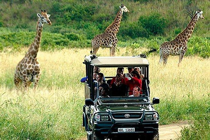 Cape Town , Aquila Safari Game Reserve Overnight Tour