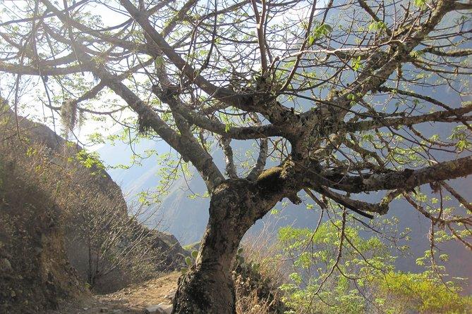 Trail To Choquequirao Inca Remains: 5d4n
