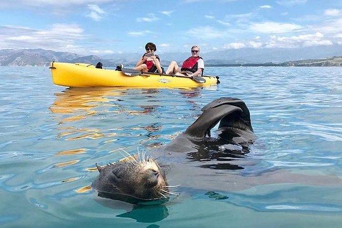 Kayaking Adventure in Kaikoura