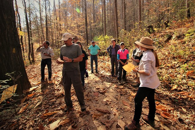 Guided Waterfall Hike with Expert Naturalist, FREE for kids and Covid-safe!
