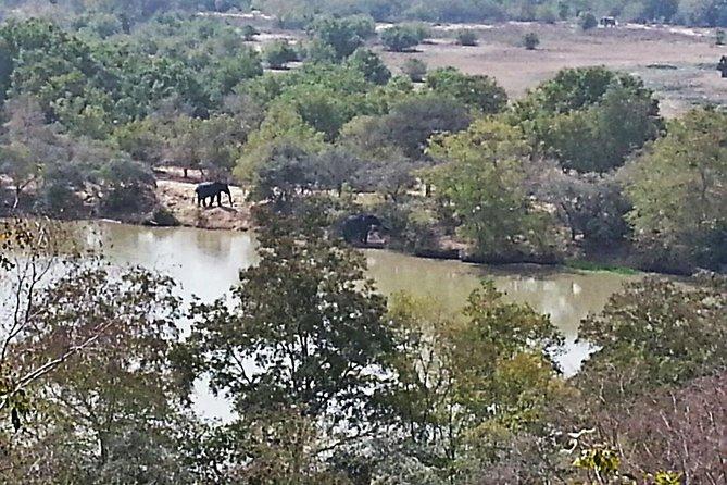 Elephants loop