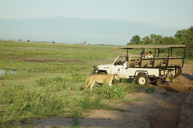 Chobe Day Trip - Photographic Safari