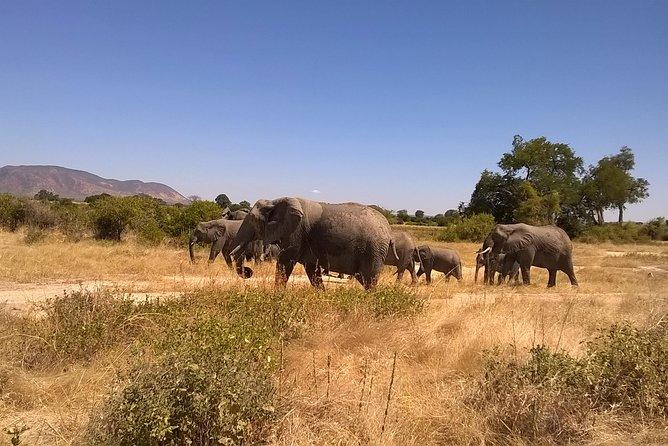"""KATAVI NATIONAL PARK """" 5 days Safari"""""""