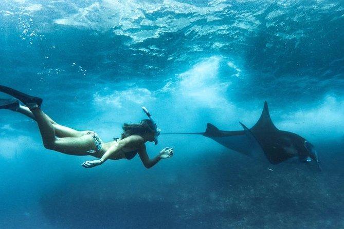 4 Spots Snorkeling Nusa Penida with Manta Bay from Bali