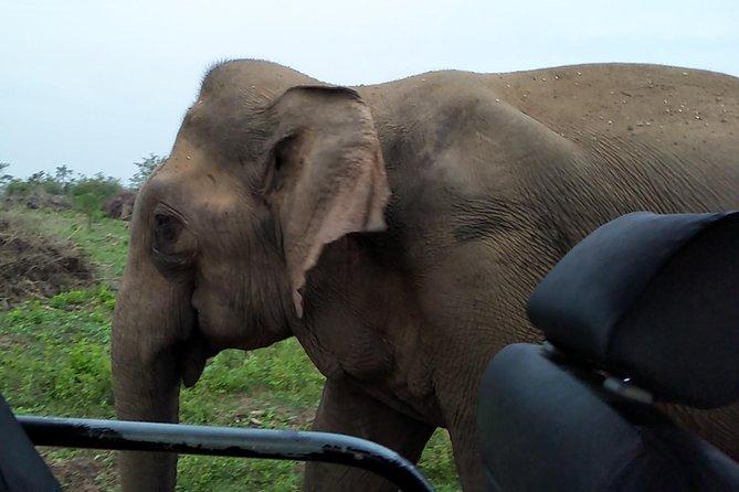 Udawalawe National Park Safari Day Tour